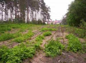 zalesnění u obce Bítouchov