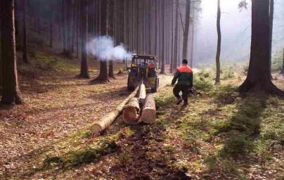 Nově zahájen prodej šípaného palivového dřeva.